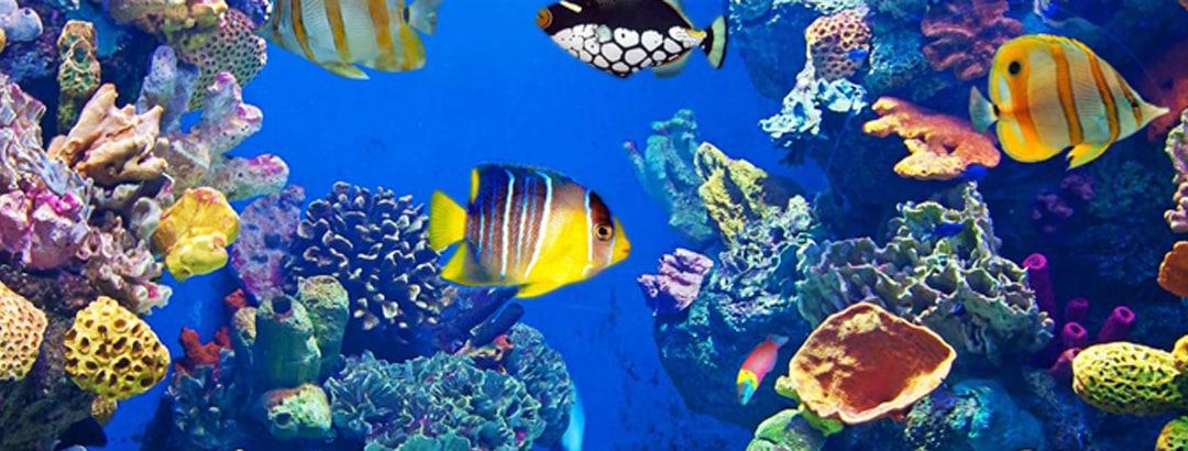 view_2 - San Antonio Aquarium