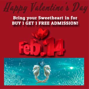 Valentine S Day Promo Copy San Antonio Aquarium