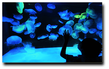 How to ensure your children's Aquarium visit is an amazing experience!