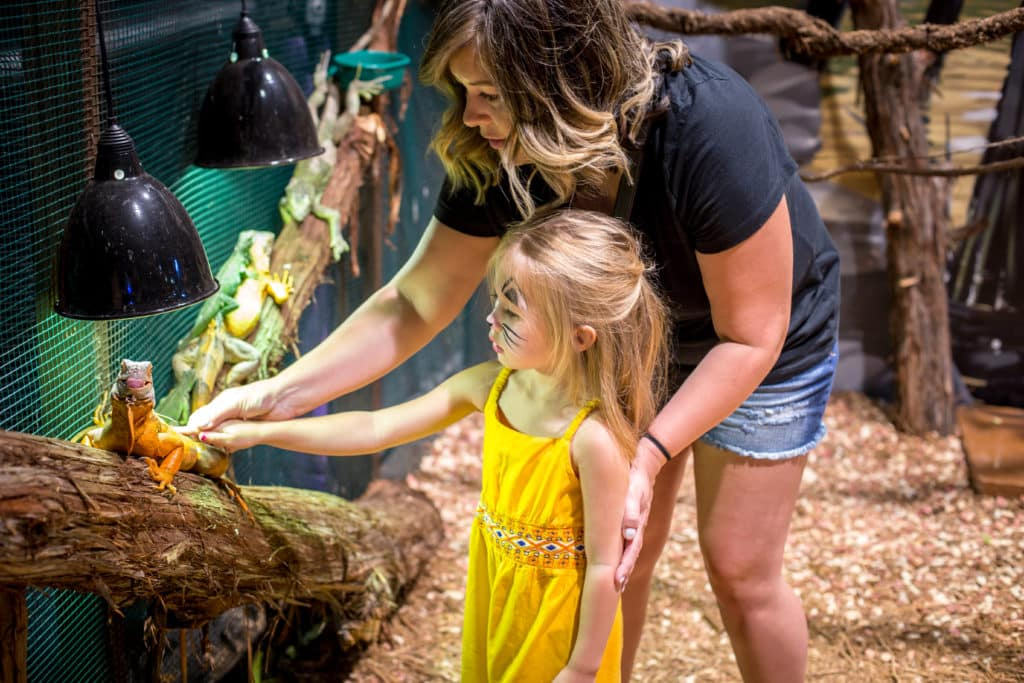 View sharks, stingrays, and fish along with reptiles, birds and more at the San Antonio Aquarium. You'll experience thousands of species in interactive exhibits at the aquarium, and have the option to add an admission ticket to the I-Guana Bounce House with the combo ticket.