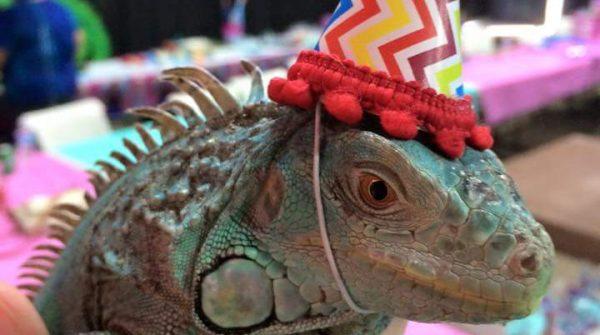 birthday_parties